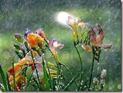 Raining on Flowers